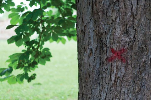Red cross marked on tree